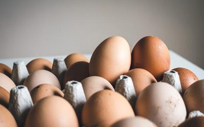 Lion marked eggs recalled – Salmonella contamination